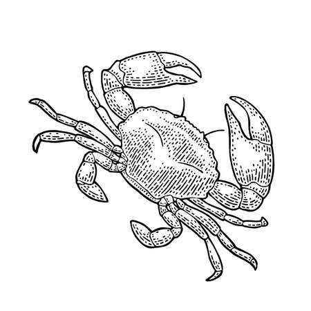Crab isolated on white background. Vector black vintage engraving illustration for menu, web and label. Hand drawn in a graphic style.