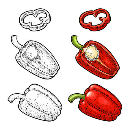 Whole and slice pepper jalapeno. Vector color illustration isolated on white background.