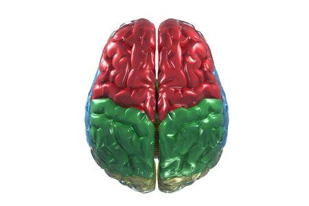 Color vista 3D del cerebro humano.