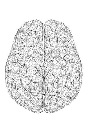 Vista 3D del cerebro humano.