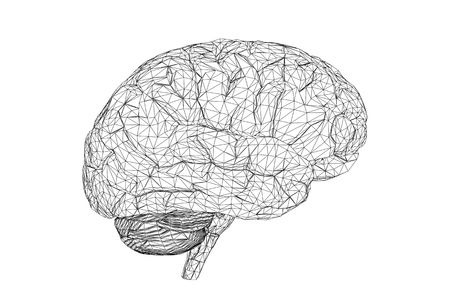 3D view of the human brain. Stock Photo