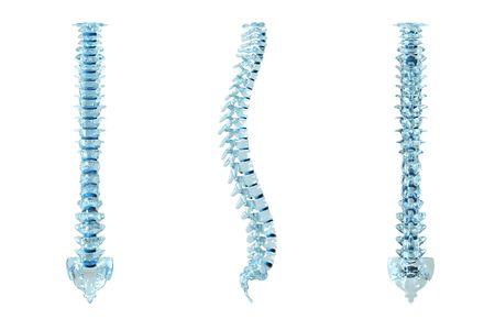 3d ilustraci�n de una columna vertebral humana. Vista frontal y lateral. Foto de archivo