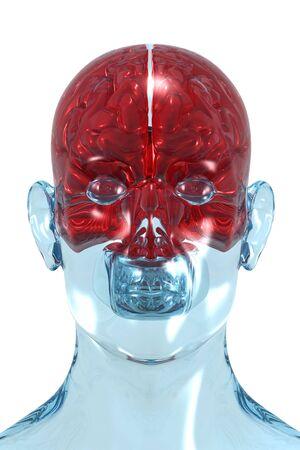 3D redering de un cerebro humano. Vista frontal.