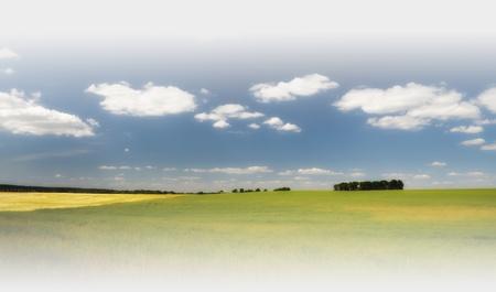 Campo de trigo bajo el cielo azul, con nubes en el horizonte