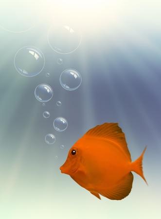 Peces y burbujas con luz, bajo el agua Foto de archivo