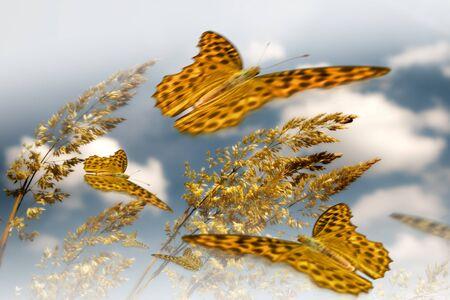 Colorida mariposa en flor salvaje