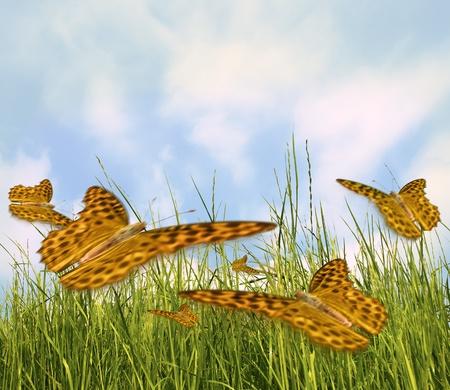 Butterflys coloridas en Prado Foto de archivo