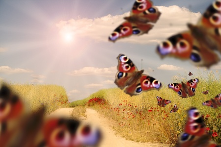 Colorful butterflys on meadow