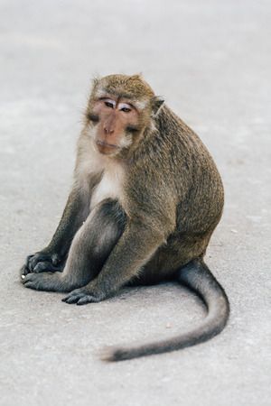 daydreaming: Monkey - Daydreaming Stock Photo