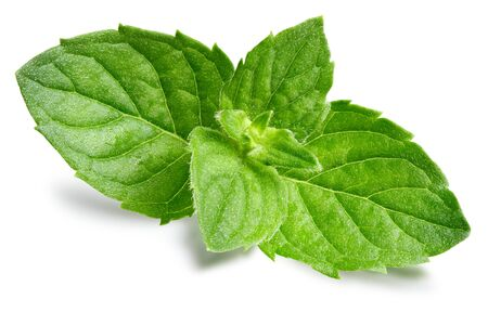 Mint leaves isolated on white Imagens