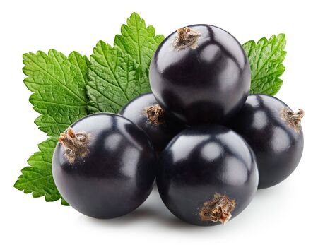 Black currant berries on white background isolated. Black currant clipping path.