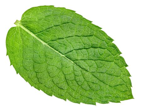 Mint leaf closeup isolated on white.