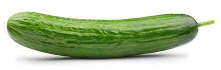 Fresh organic cucumber . Cucumber macro studio photo. High End Retouching