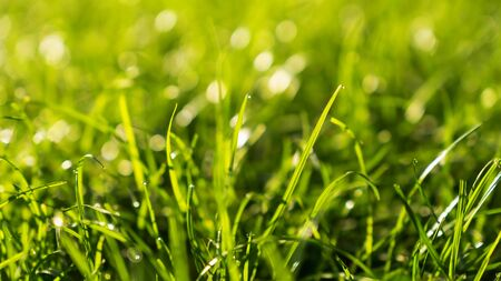 Green Grass Bokeh Background in the Morning