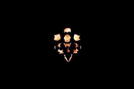 Human skull split view of medical lab skull isolated on black, realistic Skull bone,good for medical college anatomy