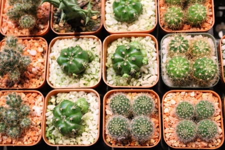 Cactus square photo