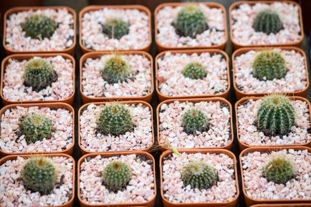 Cactus photo