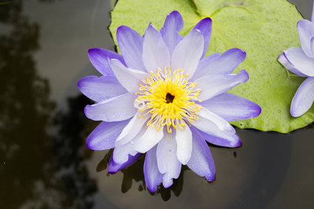 wavelet: lotus flower is plant