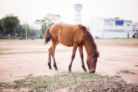 The horse is resting and eating in the field . Stock Photo