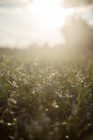 grass on the ground in summer. Stock Photo