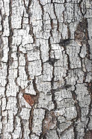 rend: Bark Tree