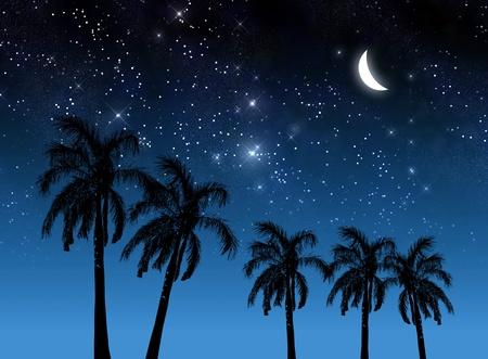 Coconut tree and stars