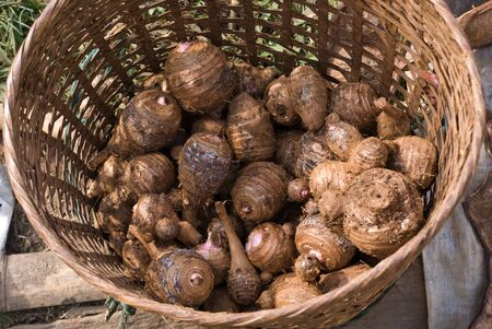 offshoot: Bulb inside basket in the country market