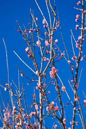 Pink flower on tree top with blue sky photo