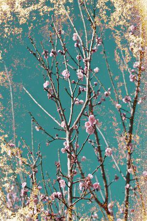Sakura flower in Vintage style Stock Photo - 9065636