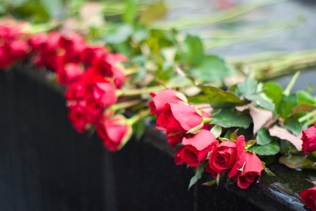 Red rose on edge of waterfall photo