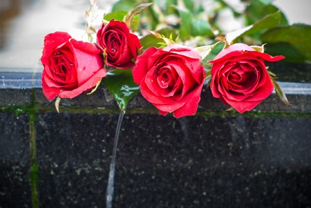 lovelorn: Red rose on edge of waterfall