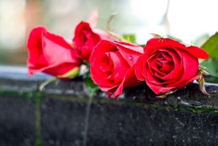 lovelorn: Red rose, Heartbroken Concept