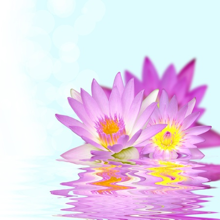 Beautiful lotus flower in the water with wave reflection photo