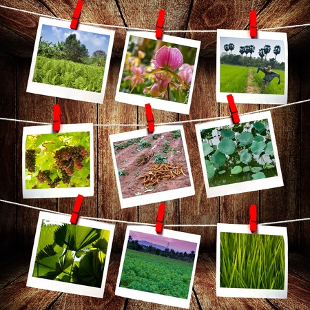 wood agricultural: Picture hanging on rope , Agriculture picture gallery concept