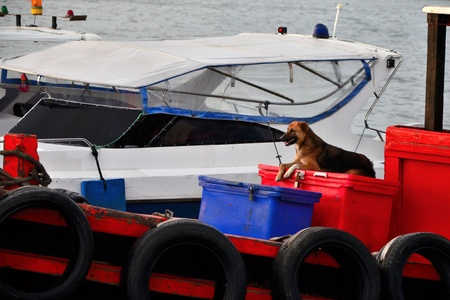 fisherman on boat: Dog sit on box in the fisherman boat with sea background