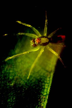 Spider behind the leaf in the dark, Mystical concept photo