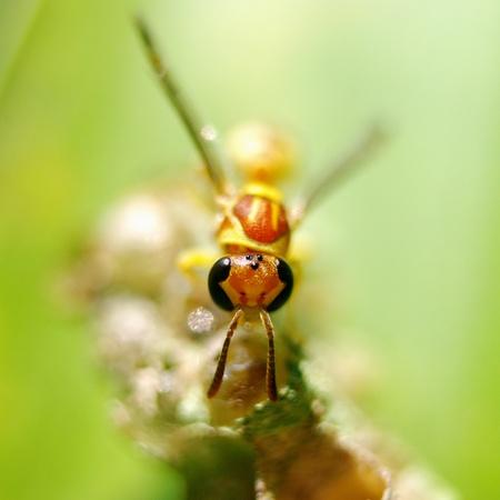 Hornet photo