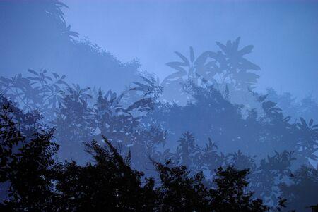 muti: Tree canopy with Muti exposure technic Stock Photo