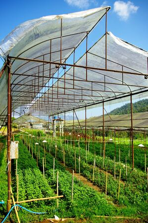 Plant green house flower nursery in Thailand Stock Photo - 14845650