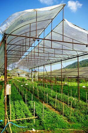 Plant green house flower nursery in Thailand photo