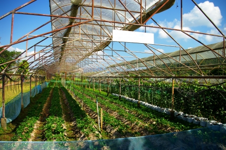 Plant green house flower nursery in Thailand photo