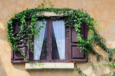 Nice window with ivy in urban style photo