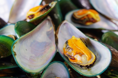 Asian green mussel Stock Photo - 15174297