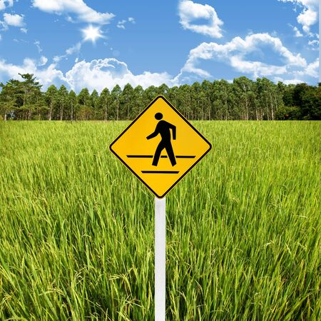 Travel in countryside concept, Crossroad sign with rice field photo