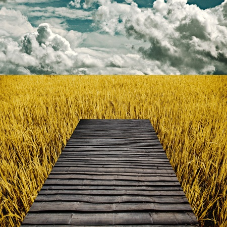Bamboo bench in golden rice field, Harvest time concept photo