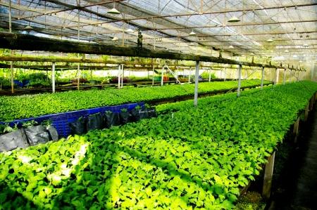 Plant groene huis bloem kwekerij in Thailand