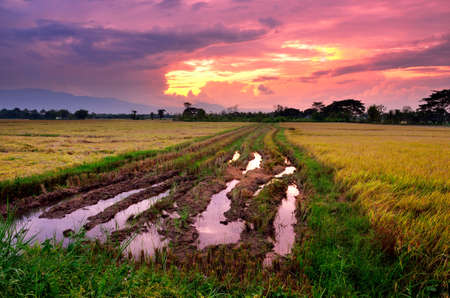 Nice rice field landscape with drama sunset sky, Countryside of Thailand photo