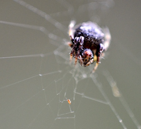 Little spider on web close up  photo