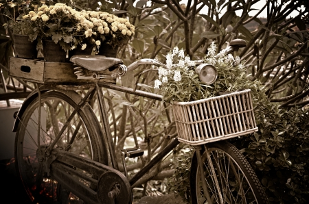sepia: Vintage bicycle with flower decorations