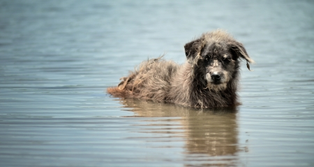 piteous: Stray dog in the lake Stock Photo